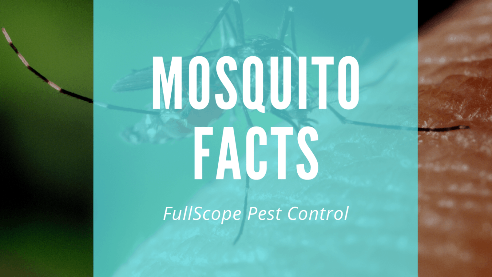 10 Facts About Mosquitoes In Your New Caney Yard