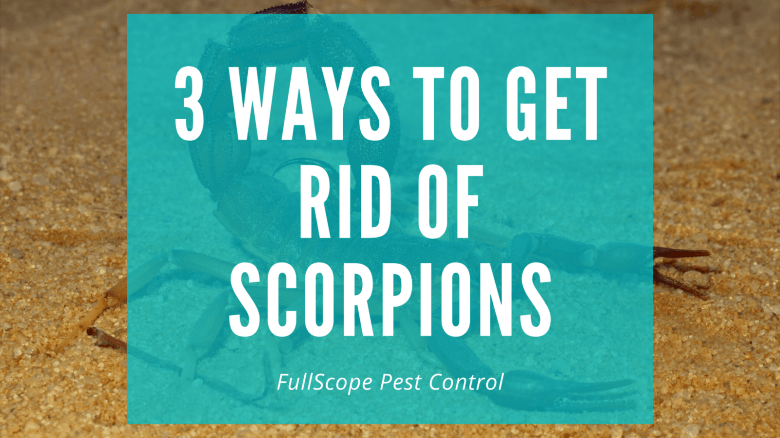 3 Easy Steps to Get Rid of Scorpions on Your New Caney Property