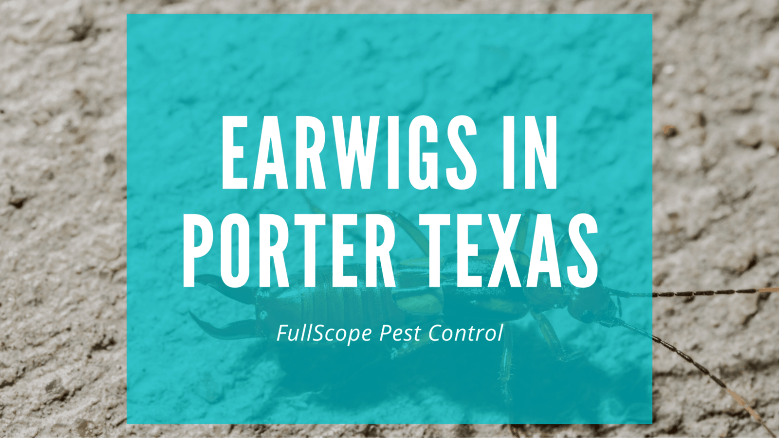 Earwigs in Your Porter Home