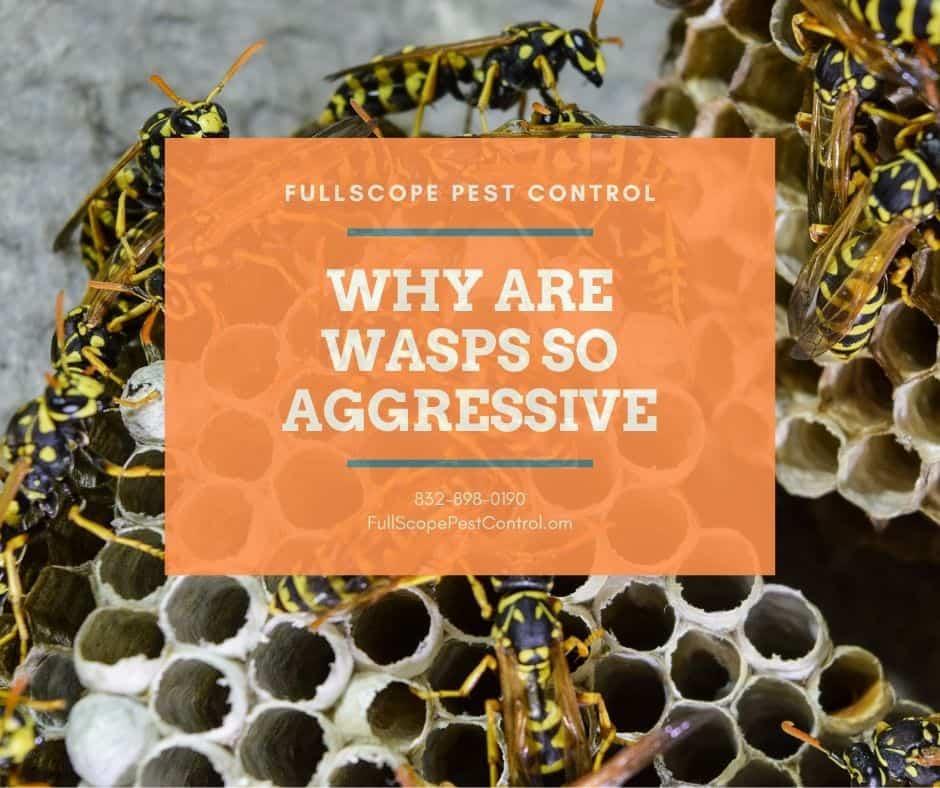 Aggressive Wasps