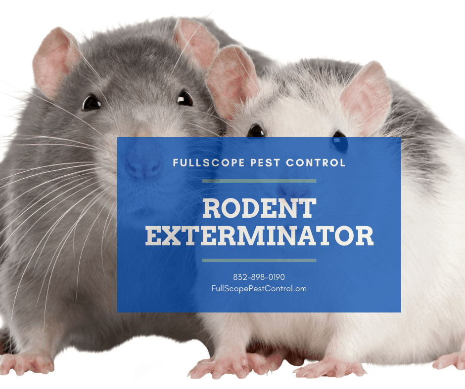 Porter Rodents Control & Removal Methods: Get Rid of Rodents | FullScope