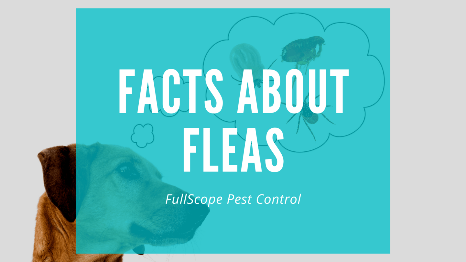 16 Facts About Fleas on Your Porter Property