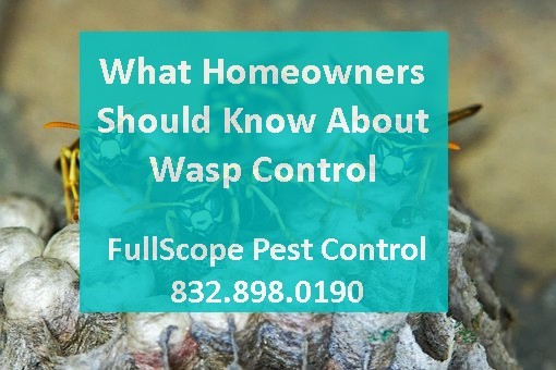 What New Caney Homeowners Should Know About Wasps Removal