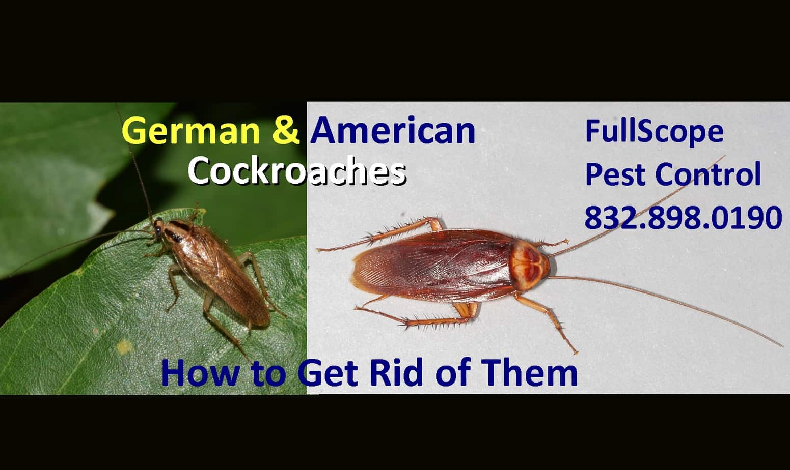 How to Get Rid of German Cockroaches and American Cockroaches in Texas