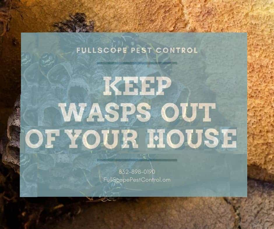 What To Do About Wasps In Your Porter Home