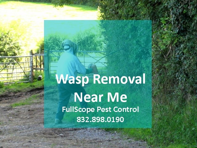 Wasps Removal Near Me in Porter, Texas