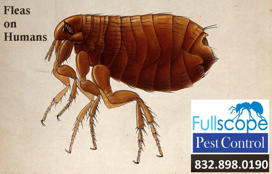 Fleas on Humans: Should You Be Concerned?