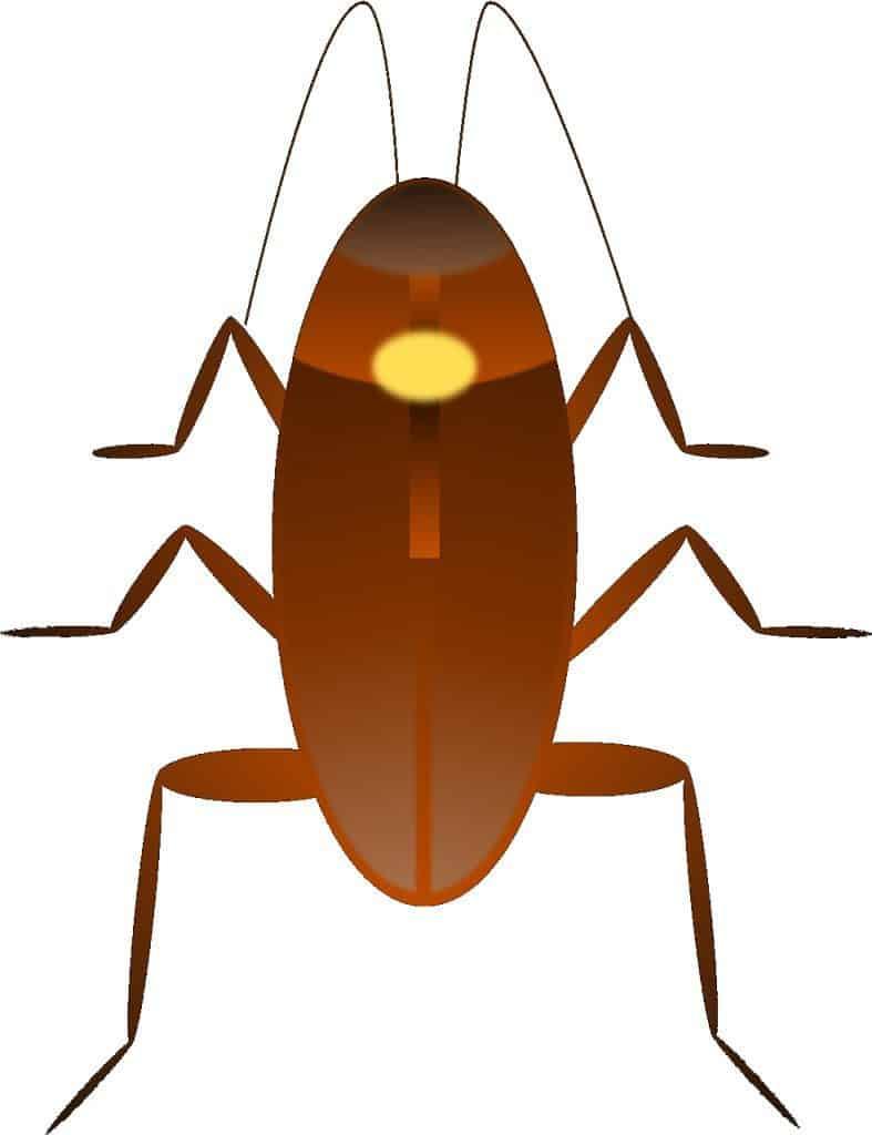 Get Rid of German Roaches