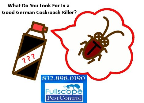 What Do You Look For in a Good German Cockroach Killer?