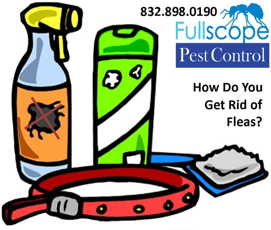 How To Get Rid of Fleas In Your New Caney Home