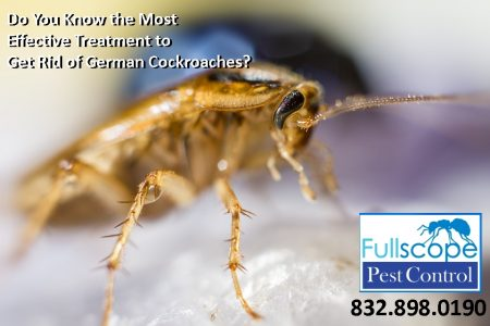 Most Effective Treatment to Get Rid of German Cockroaches?