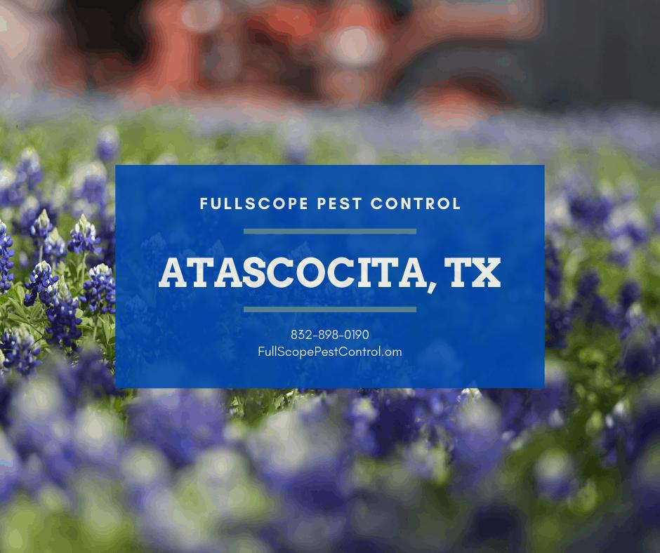 Atascocita Texas Pest Control
