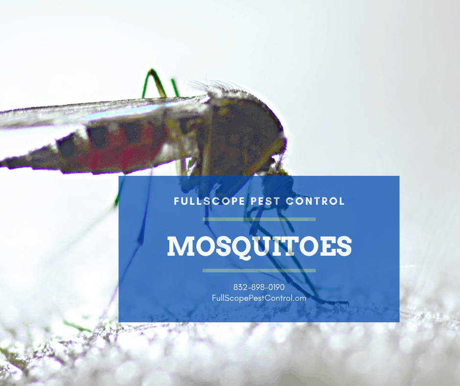 Conroe, TexasMosquito / Spider Automatic Misting Systems