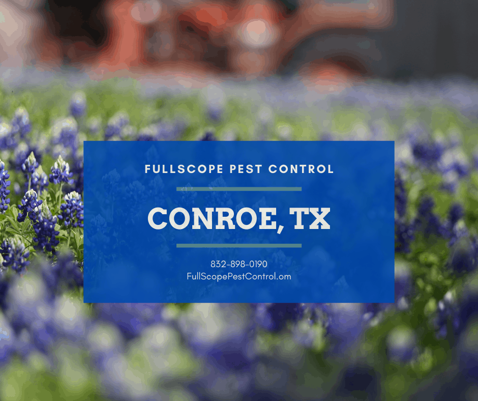 Residential Pest Control Conroe Texas