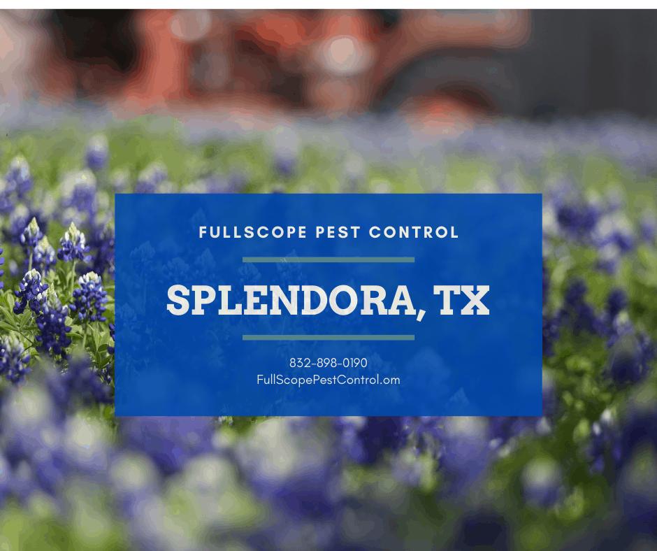 Splendora, Texas Pest Control Company – FullScope