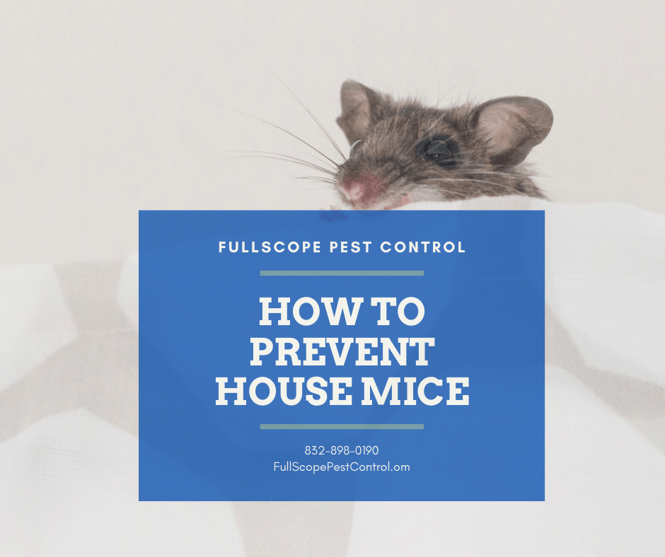 How to Prevent House Mice