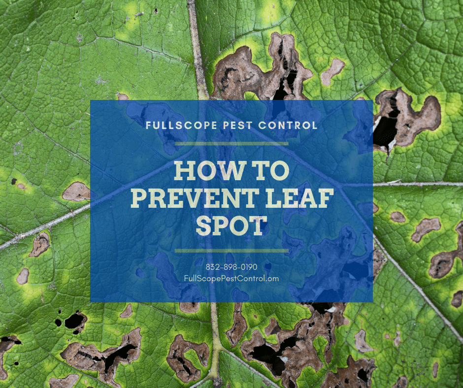 Prevent and Control Leaf Spot