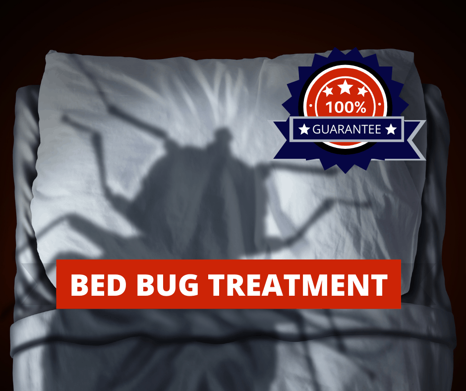 kingwood bed bugs